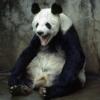 Злой, Панда