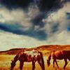 Paiyge: horse