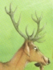 hunter_deer userpic
