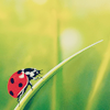 ladybug -- from freetimer_icons