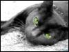 a_snork userpic