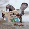 голубь с картой