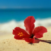 beachlover926 userpic