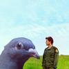 dianora: bsg lee/pigeon