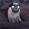 xlieblingx: pug scared bobby chiu