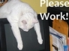 Cat_Please work