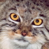firstmanul userpic
