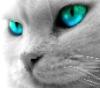 seeaf userpic