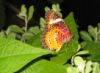Я, мир, тьма, жизнь, бабочка