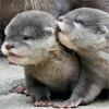 i_speak_tongue: otter brothers