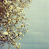 marmalade_girl_ userpic