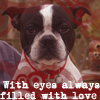 Manu: Dog-Kenshin-Eyes full of love