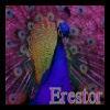 Erestor peacock_by_mdarkdreamer