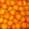 orange_sinead: апельсины