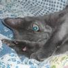 coy cat