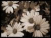 leesbees userpic