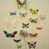 misc - butterflies