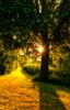 light behind the tree