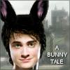 the bunny harry
