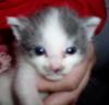 Kitten Shawn