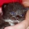 Kitten Gandalf
