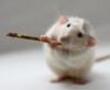 rat_lord userpic