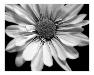 emo flower