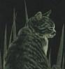 badcat userpic