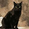La misteriosa gatta