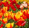 Slanted spring