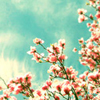 blossominglife userpic