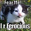 aww, fearce, cute