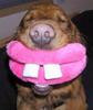Mific: Dog grin