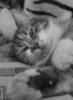 will_05(Записки кота-путешественника)