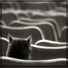 jenntropy userpic