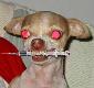 a_sick_puppy