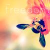 Dalila: freedom biene