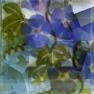 blossomviri userpic