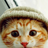 False gods are just as good, y'know.: kitty with a hat