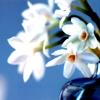 lyss_monaghan userpic