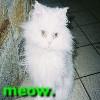belle_blanc userpic