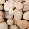 Applesauce Parker: daisy