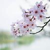 Ree: Flower