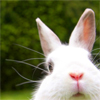 cute bunny!!! <3