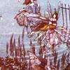 Kate: fairy illustration