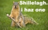 squirrel with shillelagh