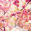 blossoms, spring