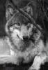 steel_wolf44 userpic