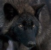 rainbowwolfie userpic