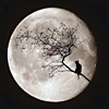 full moon with cat in tree